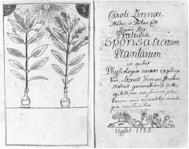 Præludia sponsaliorum plantarum ('on the prelude to the wedding of plants') was the first academic paper written by Swedish botanist Carl Linnaeus. Published in 1729, its findings elicited an indignant response from many who found the notion that God's lovely flowers had sex blasphemous.