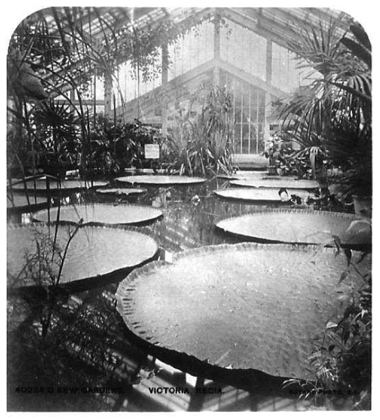 The world's largest Victorian glasshouse, Royal Botanical Garden, Kew.